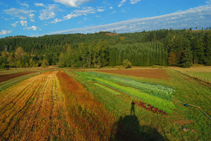 view from combine